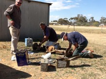 Car 22 welding up rear end at Menindee