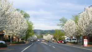 Spring in Cowra
