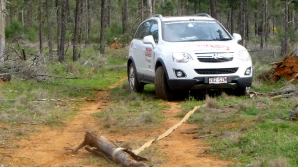 """""""Gardening"""" in Back Yamma State Forest, near Forbes"""