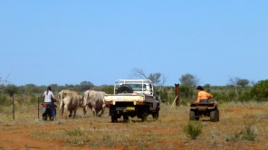 The whole family gets involved in mustering at Comarto...