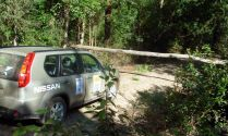Tree down... Nissan X-Trail, during an event survey for the 2009 Classic Outback Trial