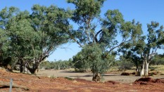 A pic of a wide, dry outback river bed.