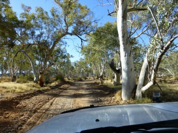 Track going through a tree lined gorge