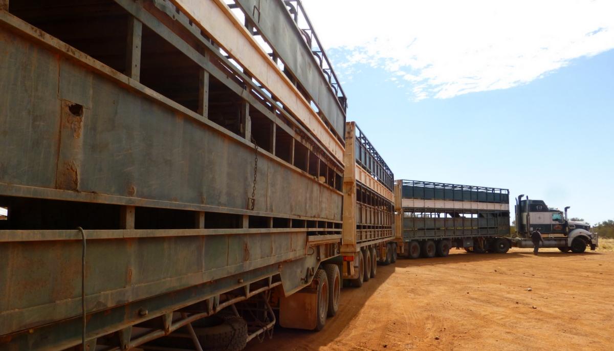 Road Train at Bushy Park