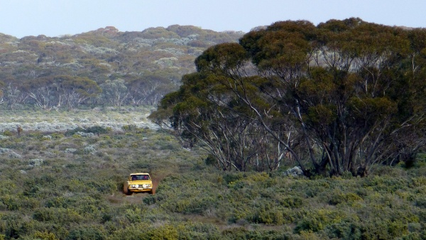 Ross and Lisa Dunkerton's Datsun 1600 on a closed road section near Renmark.