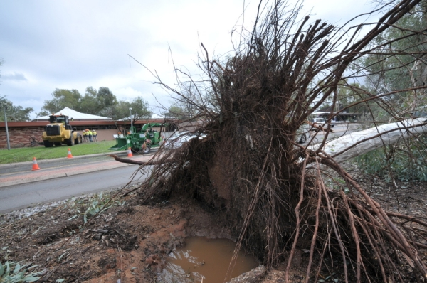 Uprooted tree outside Alice Springs Town Council